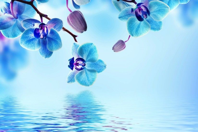 <b>Blue flower</b> | Turquoise / Azul | Pinterest |