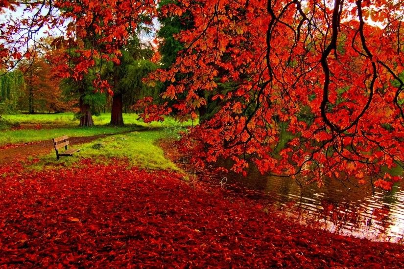 Fall Leaves Background Wallpapers