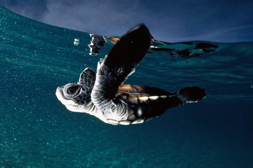 ... Wonderful Sea Turtle Backgrounds.