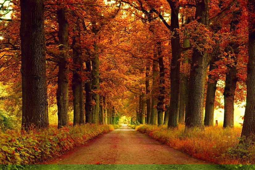 autumn park alley wallpaper