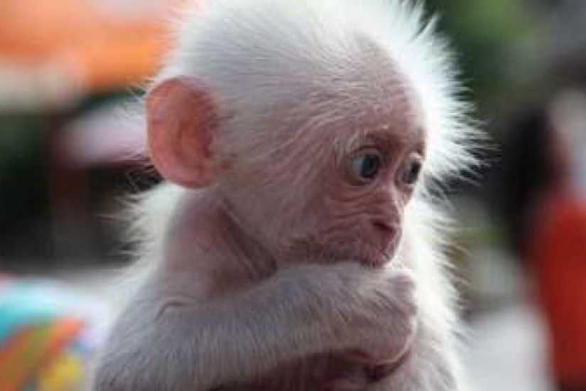 HD Images, HD Pictures, Backgrounds, Desktop Wallpapers - hd wallpaper ...  baby funny monkey ...