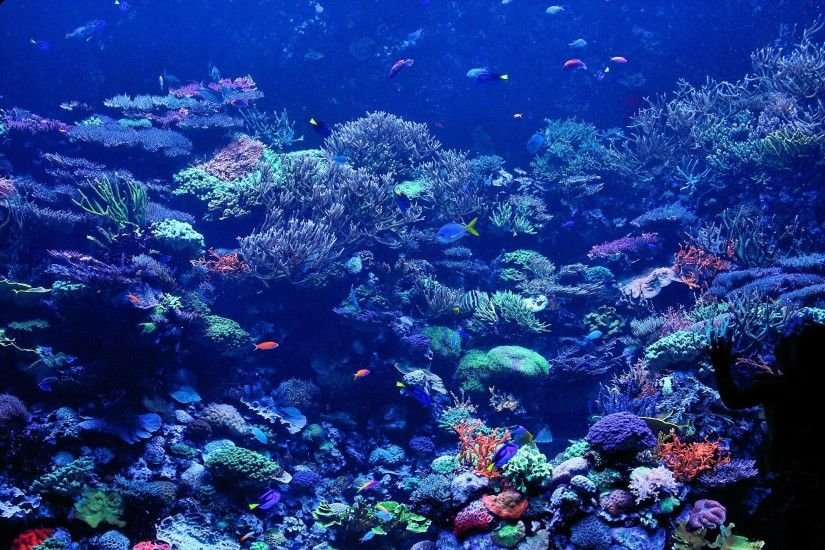 Reef Wallpaper For Windows #6bh