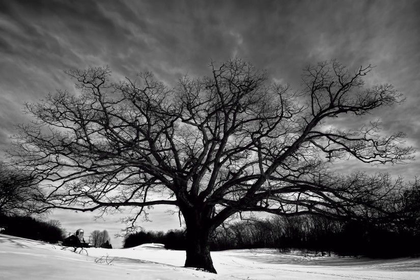 Black And White Images Of Trees 28 Free Hd Wallpaper ... | Earth |  Pinterest | Hd wallpaper, Free hd wallpapers and White image