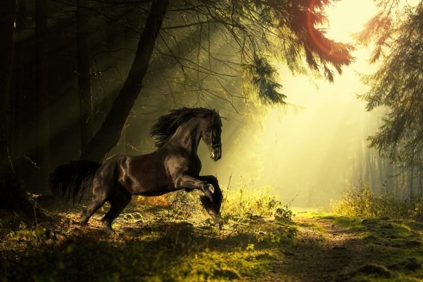 beautiful horse wallpaper 1920x1200 1080p