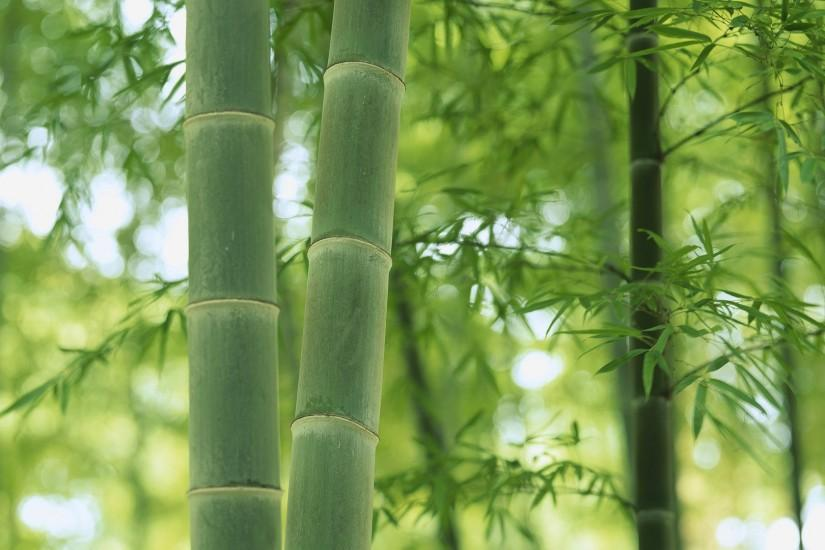 most popular bamboo wallpaper 1920x1080