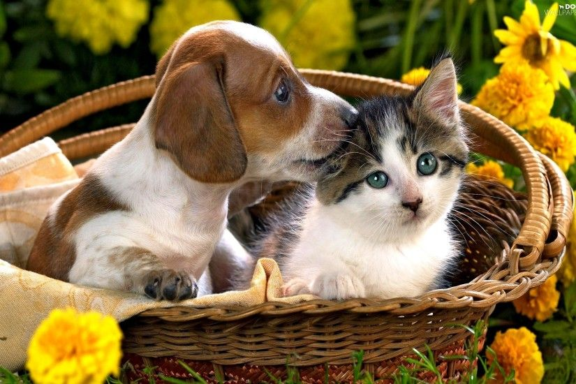 basket, Beagle, cat, Flowers, puppie