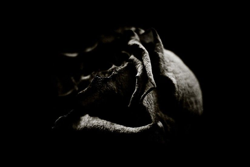 Wallpapers For > Gothic Black Roses Wallpaper