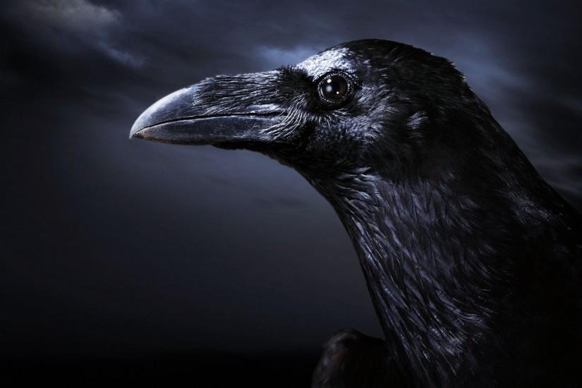 crow wallpapers and backgrounds | Crow Black Background Wallpaper ,Images,Pictures,Photos,