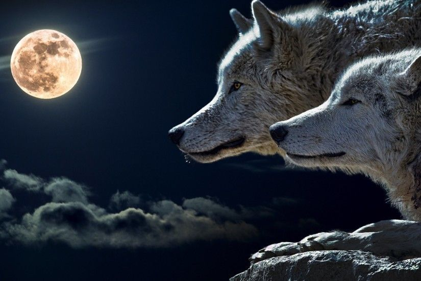 Wolves and Full Moon HD Wallpapers. 4K Wallpapers