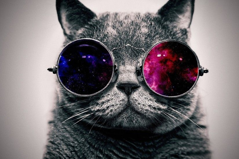 Preview wallpaper cat, face, glasses, thick 1920x1200