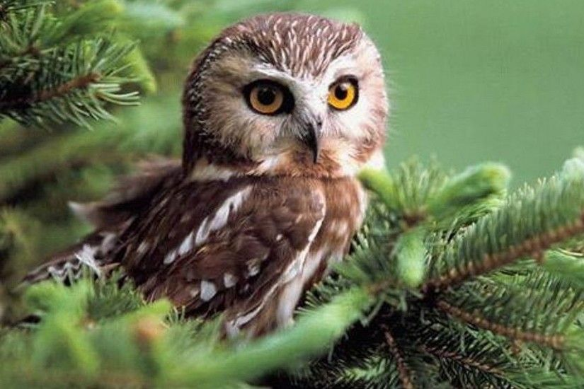 cute owl desktop wallpaper. Â«Â«