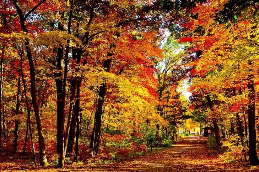 Forest - Autumn Peaceful Path Forest Pathway Landscape Alley Road Sky  Colors Splendor Leaves Nature Trees