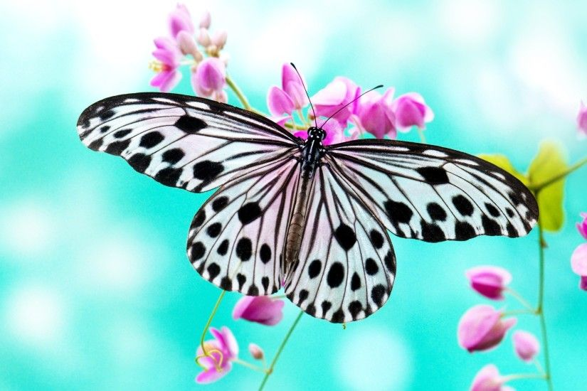 Butterfly · white and black butterfly wallpaper ...
