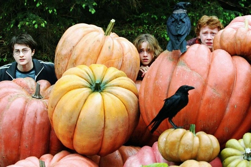 Wallpapers Backgrounds - harry potter hermione granger ron weasley hp4  pumpkin hide 1920x1080