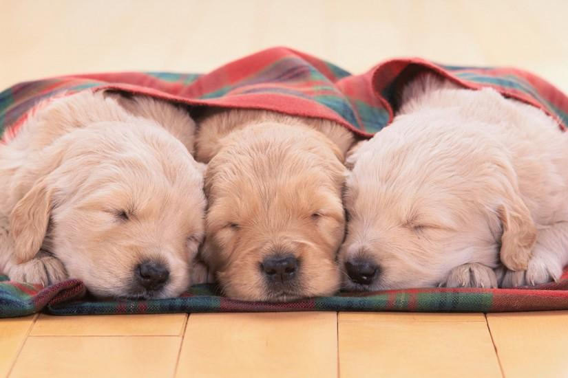 puppies wallpaper 1920x1080 large resolution