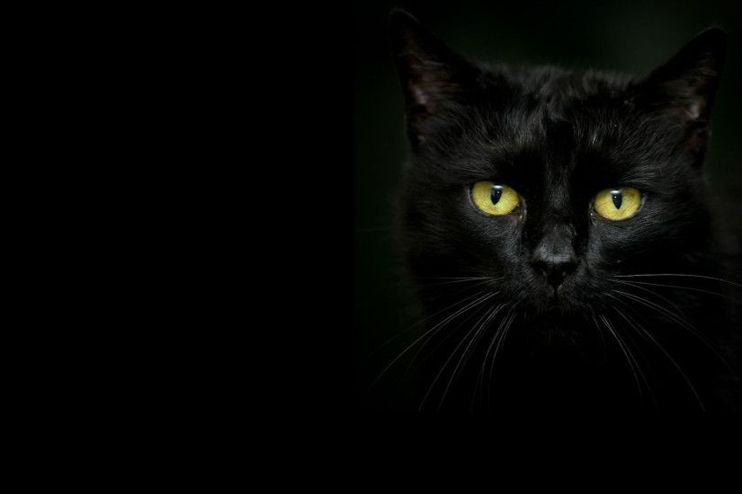 Beautiful black cat on a dark background