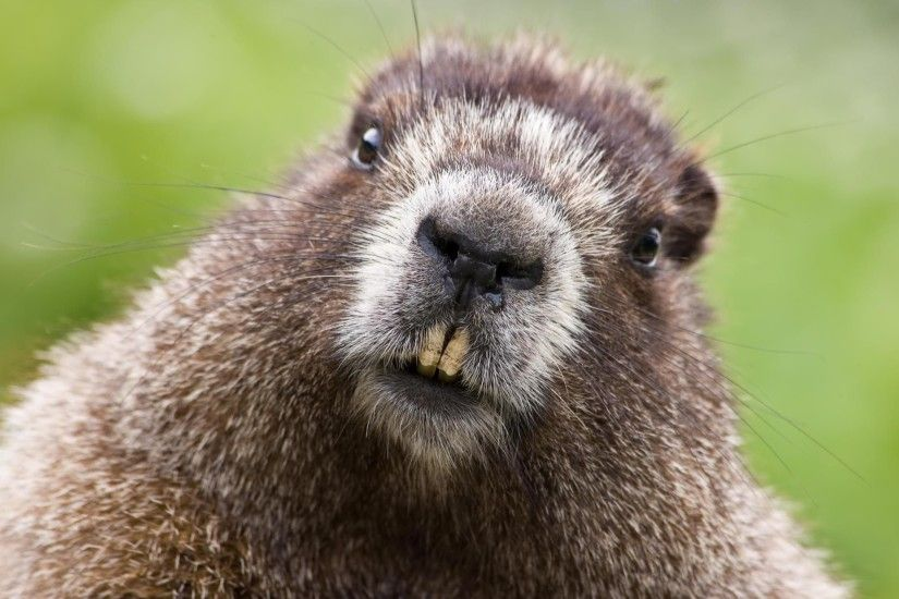 Groundhog HD Desktop