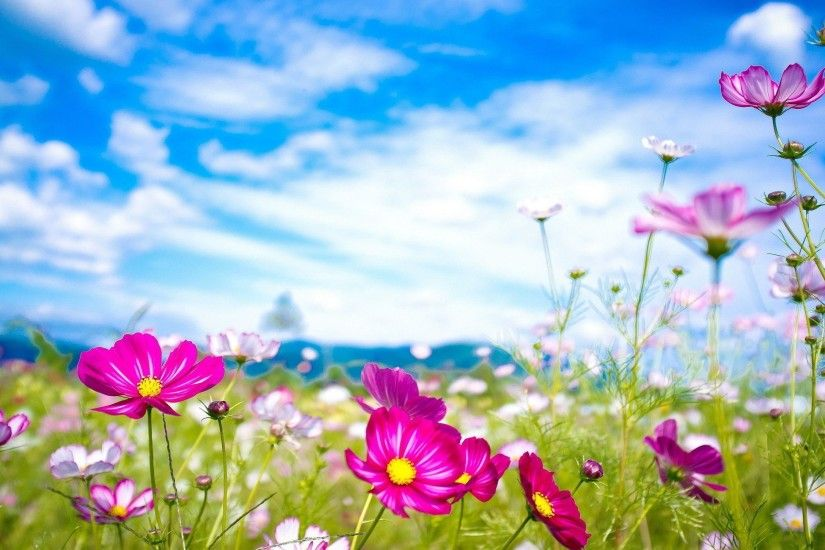 Wallpapers For > Pretty Summer Flower Backgrounds
