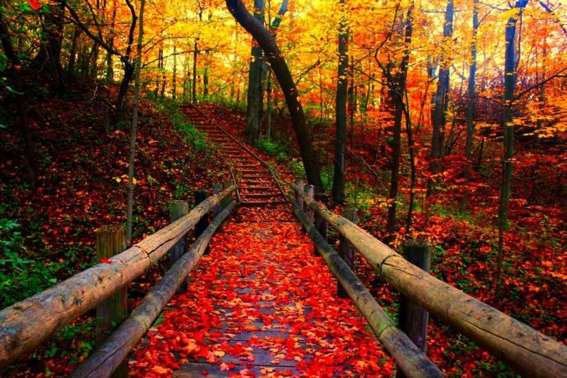 Leaves Leaf Autumn Color Forest Fall Nature Tree Seasons Landscape Season Wallpaper  Wallpapers