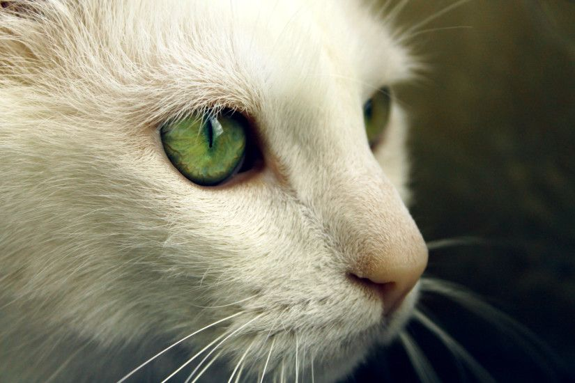 Cat With Green Eyes HD Wallpaper