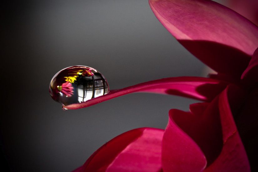 Full Hd Flowers Droplets Wallpapers
