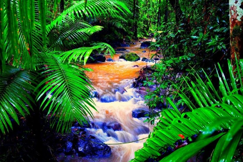 Download Rain Forest Creek wallpaper