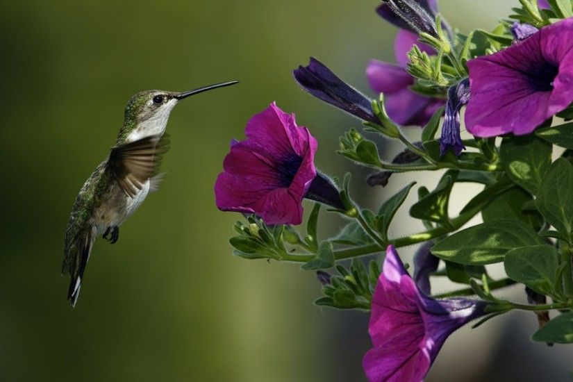 Free Purple Flowers Bird Full Screen High Resolution Wallpapers Desktop  Download