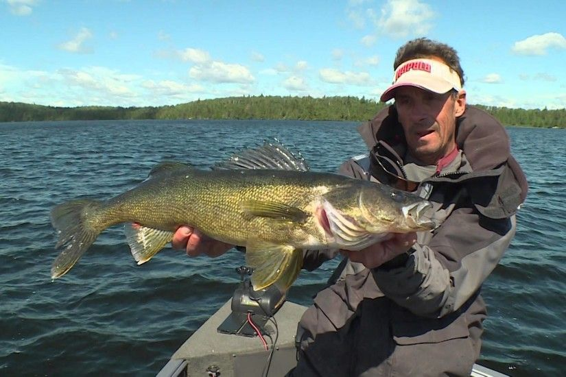 St. Croix Rods - Bouncing Walleyes