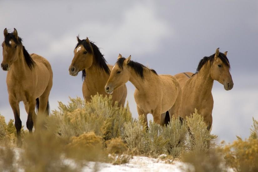download free horse wallpaper 2560x1600 for desktop