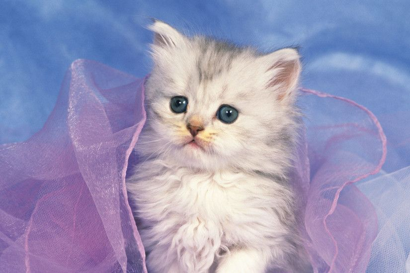 Pictures Of Cute Kittens Wallpapers (68 Wallpapers) – Adorable Wallpapers