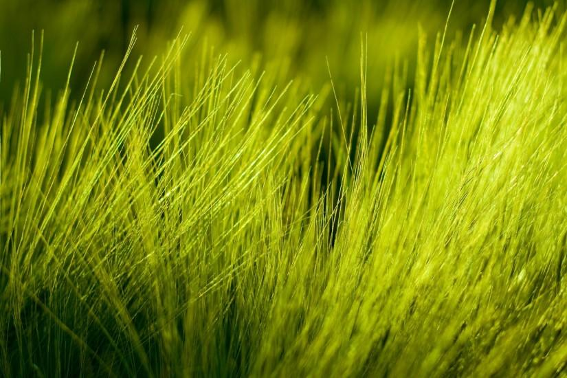 Abstract Nature Grass HD Photo