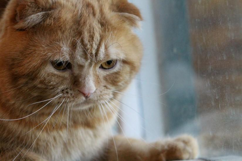 Grumpy Cat Wallpaper ·① Download Free Stunning HD