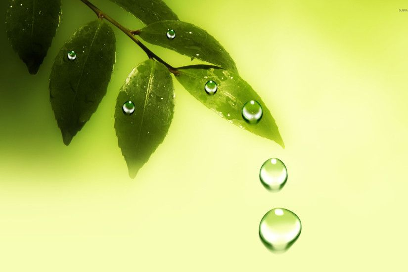 Water drops on the leaves wallpaper