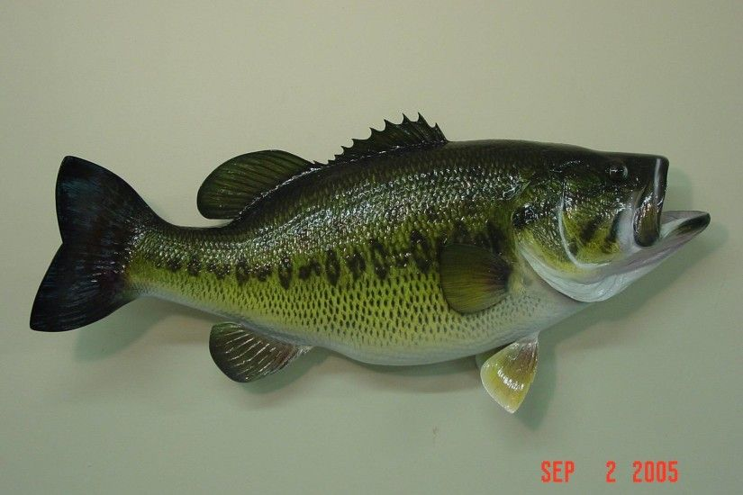 Largemouth Bass Wallpapers and Background