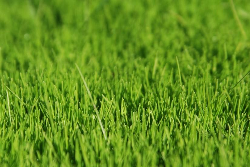 amazing grass wallpaper 1920x1200 download free