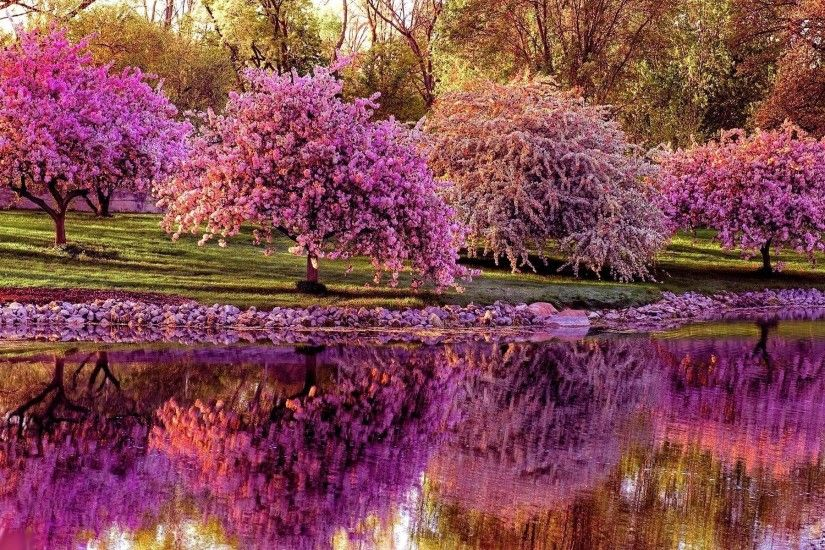 Nature Spring Scene iPad Air Wallpaper Download | iPhone .