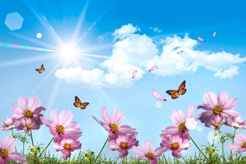 free download butterfly background 2560x1600 for ipad 2