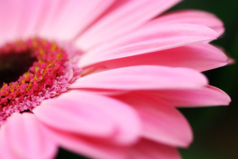 Pink Flower Image For Desktop Wallpaper 2560 x 1600 px 1.2 MB pink designs  tumblr iphone