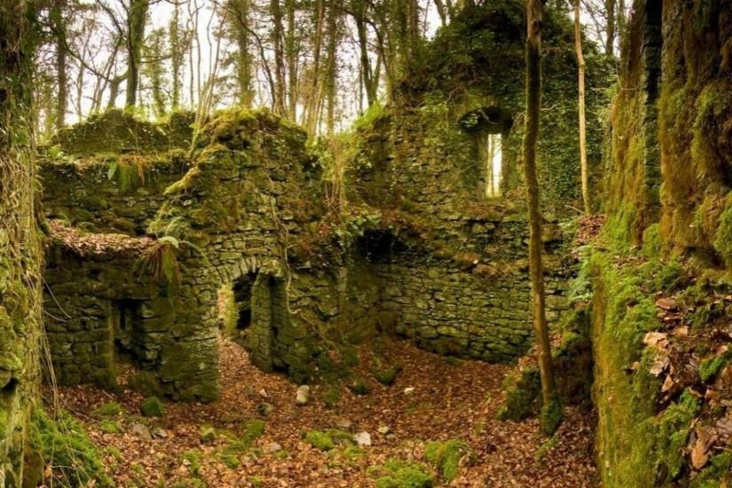 Autumn (season) ruins forest leaves ireland moss wallpaper | (15620)