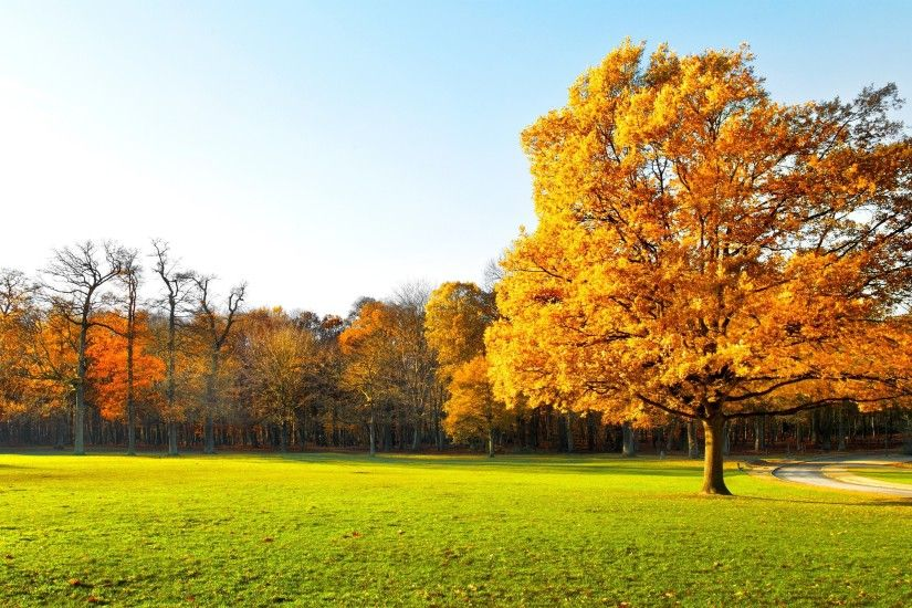 Garden landscape nature panorama autumn trees beautiful wallpaper .