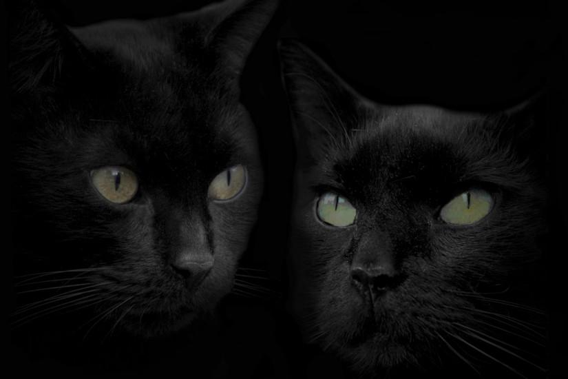 Black cat and cat