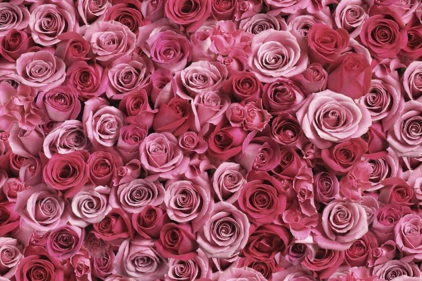 gorgerous roses wallpaper 1920x1200 for tablet