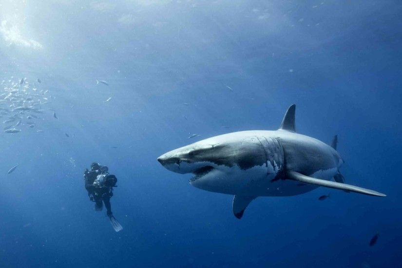 Widescreen Wallpapers of Sharks – Awesome Backgrounds
