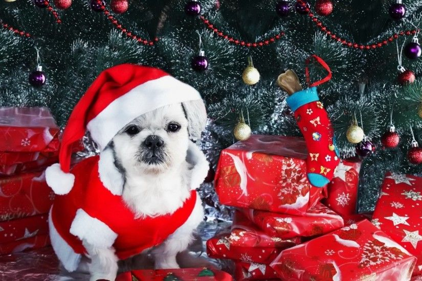 Download 1920×1080 Dog, New year, Gifts, Christmas tree, Ornaments Wallpaper,  Background Full HD 1080p