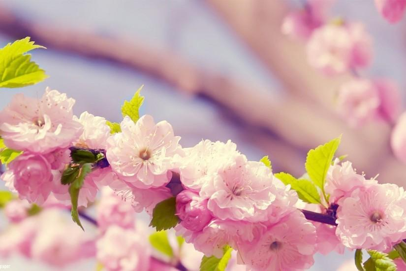 new spring flowers wallpaper 1920x1080