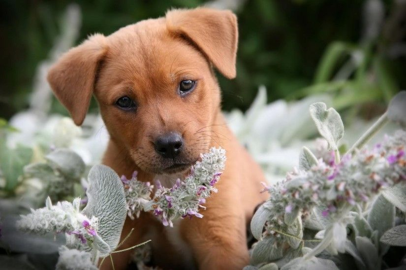 animals-puppies-dog-on-a-clothes-line-facebook-timeline-cover-photo-for-fb.jpg  (851×315) | Display Idea | Pinterest | Timeline