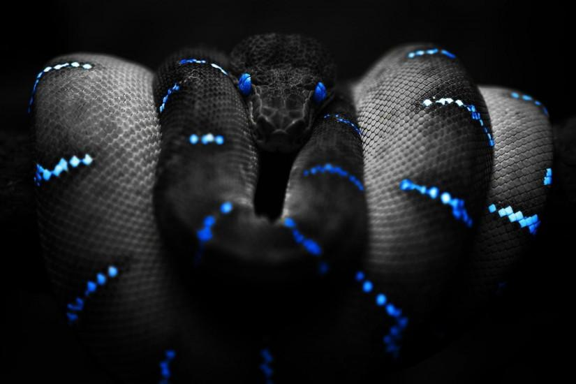 3D Snake Wallpaper and Image Free Download