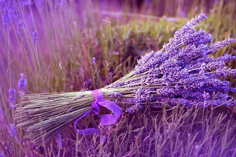 download free lavender background 2048x1152 mobile