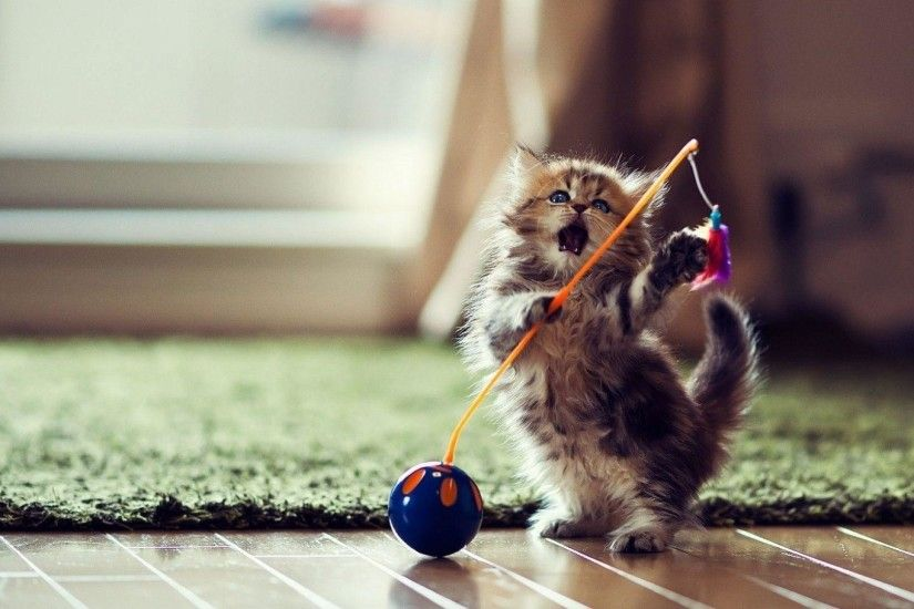 Funny Kitten Playing Toy Wallpaper | warnerboutique