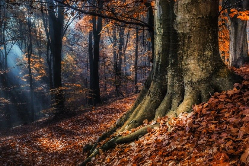 Download now full hd wallpaper black forest autumn rays germany ...